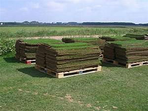 Rouleau Gazon Naturel : gazon en rouleaux naturel ~ Melissatoandfro.com Idées de Décoration