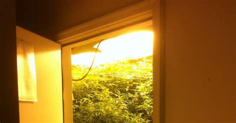 Cannabis Samen Bestellen