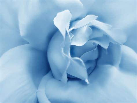 blue pastel flower photograph by jennie schell
