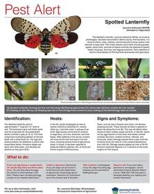 spotted lanternfly pest alert 187 township of spring