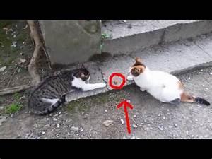 Funny Cats / Fu... Funny Cat Videos