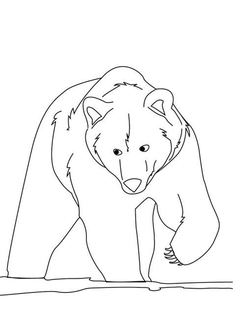 disegni da colorare di siamo orsi 24 disegni di orsi da colorare pianetabambini it