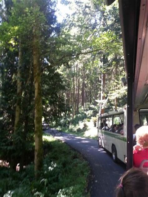 view   tram  picture  northwest trek wildlife park eatonville tripadvisor