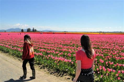 tiptoe through the tulips in washington s skagit tiptoe through the tulips in washington s skagit valley