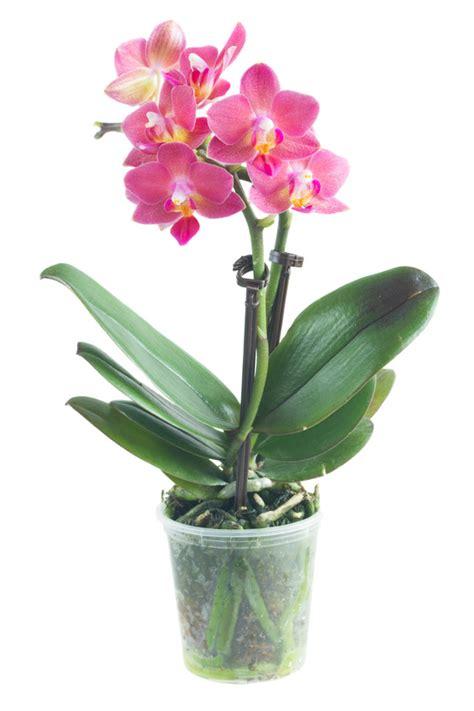air trop sec chambre entretenir une orchidée avec alysson