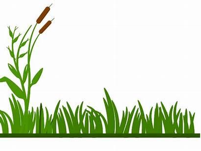 Grass Clipart Swamp Clip Background Grassland Outline