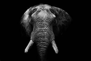 Schwarz Weiß Bilder Tiere : elefant in schwarz wei foto bild tiere elefant b w bilder auf fotocommunity ~ Markanthonyermac.com Haus und Dekorationen
