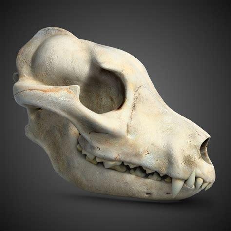 dog skull  ds