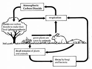 Carbon And Nitrogen Cycle