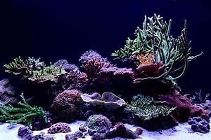 Reefs Com - Saltwater Aquarium Blog