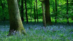 Forest Of Dean  U2013 Travel Guide At Wikivoyage