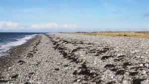 Besteht Sand Aus Muscheln : bojendorfer strand wird auf vordermann gebracht fehmarn ~ Kayakingforconservation.com Haus und Dekorationen