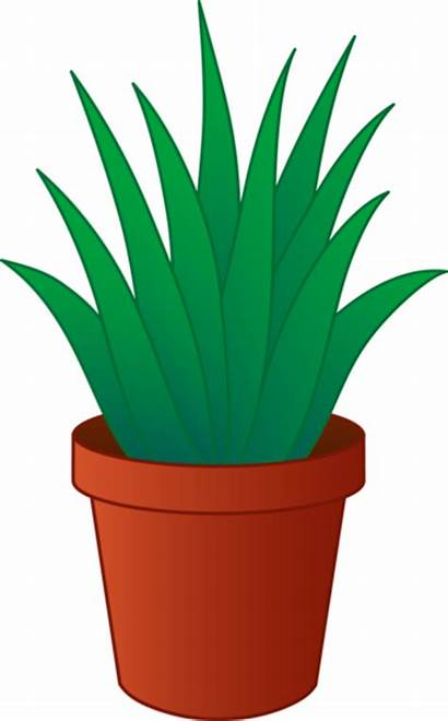 Clipart Plant Houseplant Exchange Plants Clipground Lakeshore