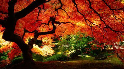 Christmas Tree Sapling Care by Autumn Tree Wallpaper 677335