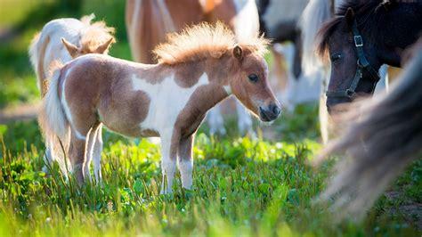 horse pony pretty 4k animals wallpapers hd