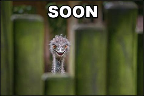Soon Meme - amazing animals pictures quot soon quot the very funny animal meme part 2 20 pics