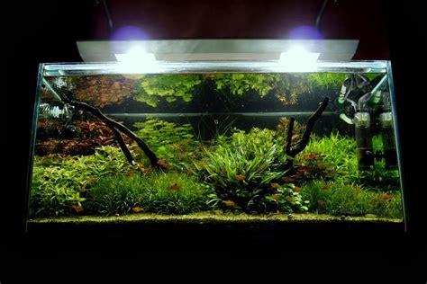 konsep aquascape natural gambar ilmu pengetahuan