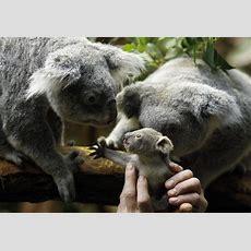 Zoo Babies Cute New Arrivals  Slideshow  Fox News