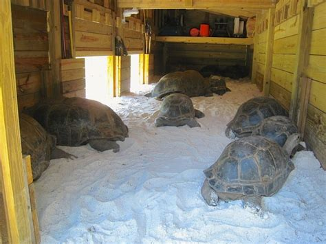Interior Of Tortoise Enclosure! They Look Like They Could