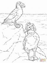Puffin Coloring Pages Puffins Atlantic Tufted Printable Popular Drawings Dot sketch template