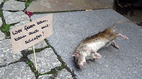 Der Tag Der Toten Ratte Neustadtgeflüster