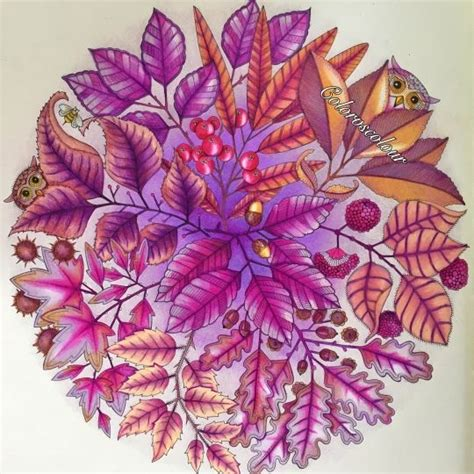 johanna basford picture  chris cheng colouring