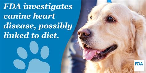 grain  diets  heart disease  dogs croton animal