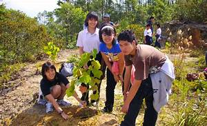 Reforestation Program Of Cameron Highlands