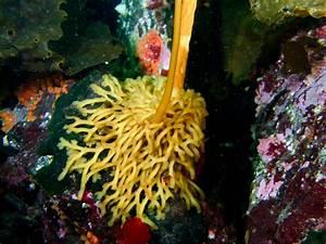 Journey Through Kelp