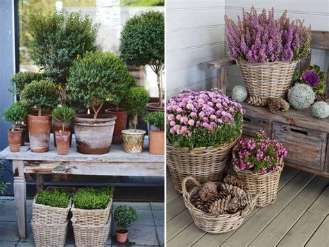 Pflanzen Für Den Balkon by Balkonpflanzen Winterhart Pflegeleichte Balkonpflanzen