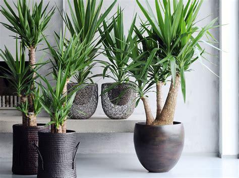 snob comme un pot de chambre leçon de déco quelle plante pour mon bureau