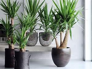 Plantes Pour Chambre : le on de d co quelle plante pour mon bureau elle d coration ~ Melissatoandfro.com Idées de Décoration
