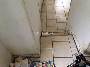Odeur Urine Chat : traitement des odeurs d 39 urine de chats et de chiens dans une maison vers bourges bst aero ~ Maxctalentgroup.com Avis de Voitures