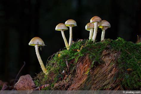 Weiße Pilze Im Garten Giftig by Pilze Im Garten Giftig Oder Essbar Gt Pilze Aber Welche