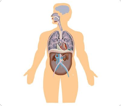 human body clipart clipground