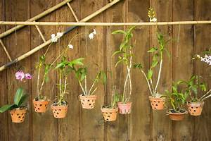 How To Grow Orchids At Home Australian Handyman Magazine
