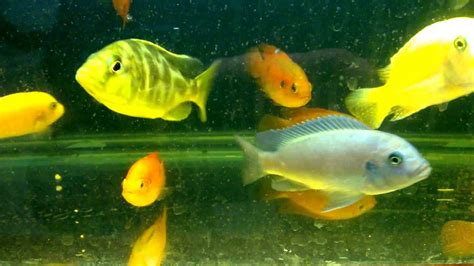 fish tank collection aquarium fish tropical fish types