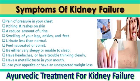 Ayurvedic Kidney Disease Treatment India, Chronic, Acute. Dr Oz Bioidentical Hormones Syria News Com. Small Business Tax Software Reviews. Payroll Systems For Small Businesses. Auto Accident Lawyer Fort Lauderdale. Help I Need A Loan And Have Bad Credit. Jersey City Storage Units Mac Email Templates. Online College Bachelors Degree. What Are The Best Auto Insurance Companies