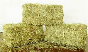 Feed an Animal with Hay for 1 Week - Remus Horse Sanctuary
