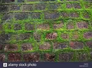 Wand Feuchtigkeit Messen : moisture stockfotos moisture bilder alamy ~ Lizthompson.info Haus und Dekorationen