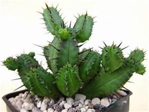 Plante Succulente Espèces Représentatives : plantes grasses tous nos sujets ~ Nature-et-papiers.com Idées de Décoration