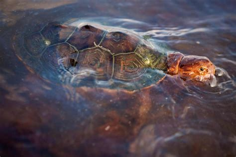 wildlife struggling five years after bp spill report nbc news