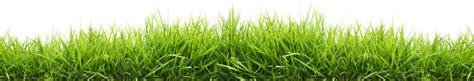 grass seed jamestown feed  seed