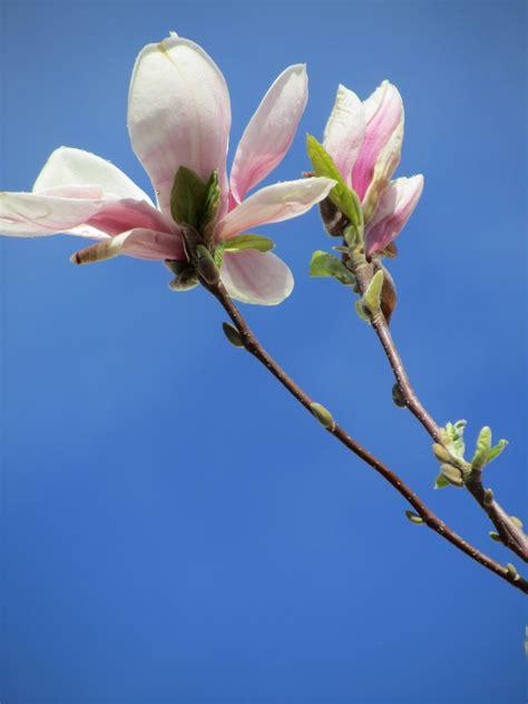 Free Images : tree nature branch blossom leaf flower