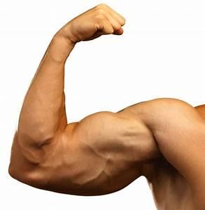 Hrozby  Ktor U00e9 So Sebou Prin U00e1 U0161aj U00fa Anabolick U00e9 Steroidy  U2022 Protein Sk