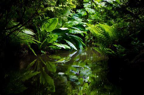 jungle  stock photo public domain pictures