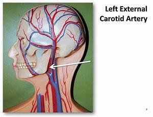 Left External Carotid Artery