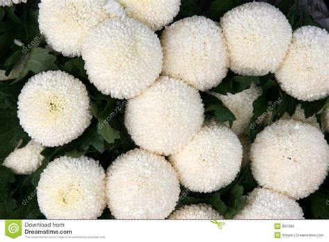 petals for sale chrysanthemums stock photo image 891080