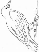 Coloring Pages Crows Printable Crow Birds Colors 1000 Mycoloring Recommended sketch template