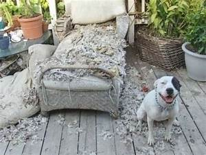bad dog nucking futs mama With dog beds for destructive dogs